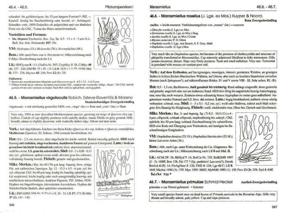 Pilzkompendium i textband beispiel